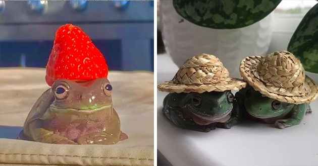 frogs in hats - thumbnail includes two images one of a frog wearing a strawberry hat and one of two frogs wearing straw hats