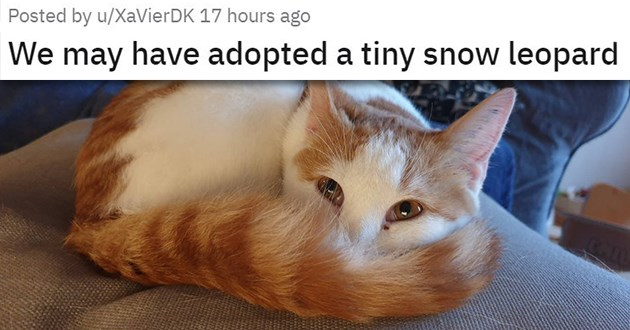 "all the newly adopted rescue animals of the week - thumbnail of smiling kitten ""We may have adopted a tiny snow leopard"""