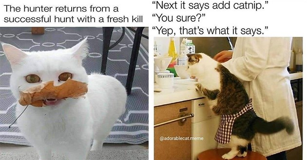 """weeks hottest and newest cat memes - thumbnail includes two memes - one of a cat carrying a leaf in its mouth """"the hunter returns from a successful hunt with a fresh kill"""" and another of a cat in an apron standing alongside human """"next it says add catnip"""""""