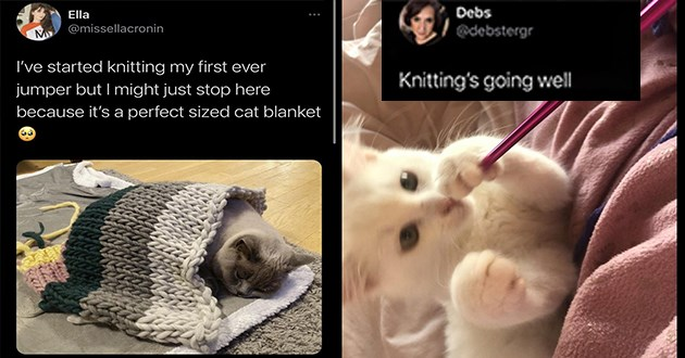 2020 arts and crafts featuring animals - thumbnail includes two images of tweets of cats | Ella @missellacronin M started knitting my first ever jumper but might just stop here because 's perfect sized cat blanket | Debs @debstergr Knitting's going well