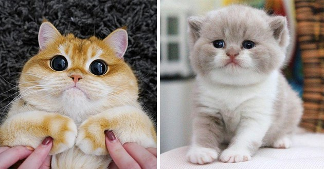 images of cats - thumbnail of two cats | cute fluffy cat with huge round eyes and tiny adorable kitten with small fuzzy ears