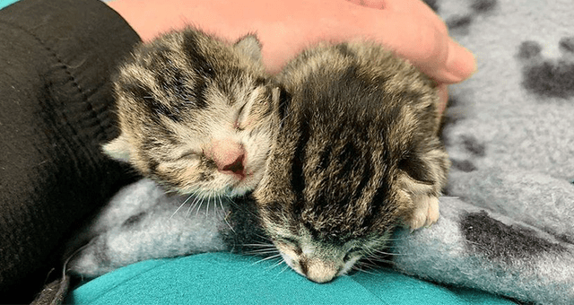 story about two kittens being rescued from getting crushed in a recycling plant thumbnail includes a picture of two newborn kittens with their eyes closed