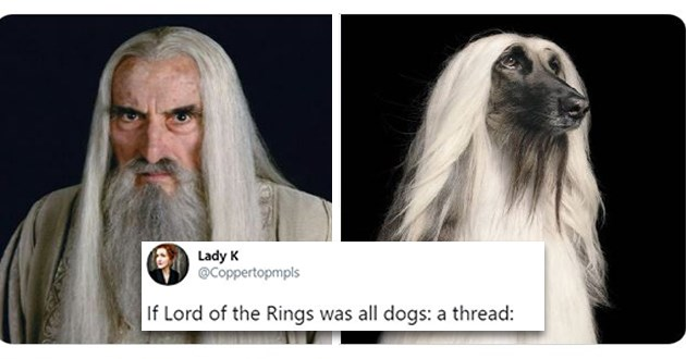lord of the rings characters reimagined as dogs - thumbnail of saruman and a white dog with long hair