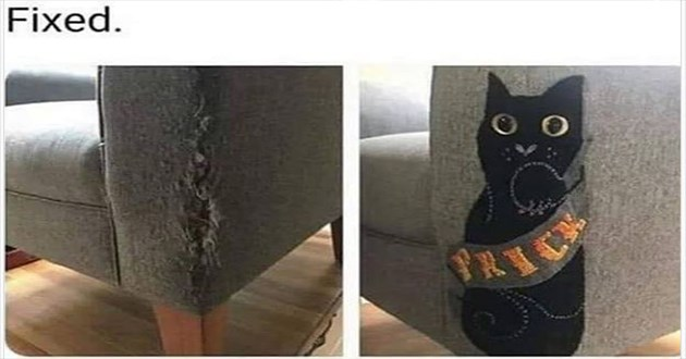"list of funny and fresh animal memes - thumbnail of corner of couch patched up ""fixed"" the patch is shaped like a black cat with the word ""prick"" written across it in fancy lettering"