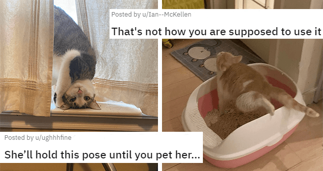 pictures of cats being weird thumbnail includes two pictures including one of a cat posing weirdly inside of a litter box and another of a cat looking like it's falling out of a window 'Comfort - Vertebrate - Posted by u/Ian--McKellen That's not how you are supposed to use it Posted by u/ughhhfine She'll hold this pose until you pet her...'