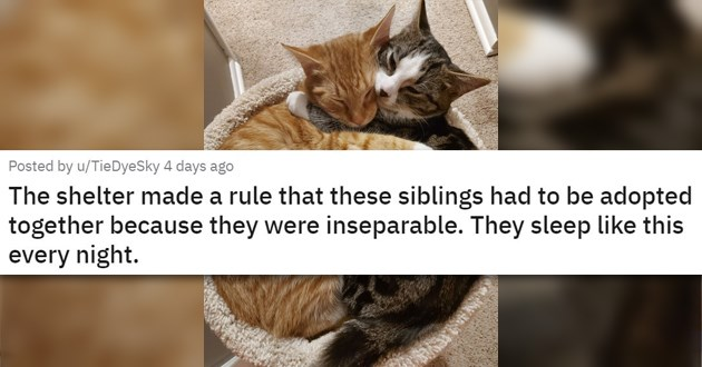 "pics and vids of the cutest animals of the week - thumbnail of two cats snuggling ""The shelter made a rule that these siblings had to be adopted together because they were inseparable. They sleep like this every night."""