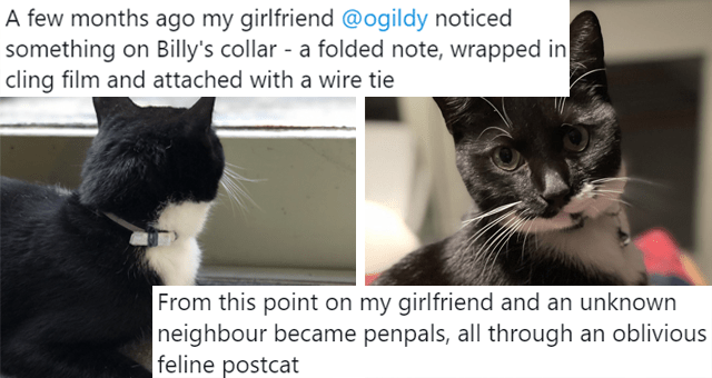 viral twitter thread of a cat who became a postman thumbnail includes two pictures of a cat including one where he wears a collar with a letter attached to it