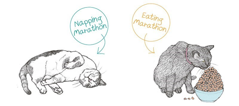 cats and their various types of sports - thumbnail of a cat having a sleeping marathon and one of a cat having an eating marathon