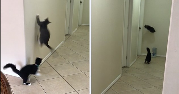 cats showing off their parkour skills - thumbnail includes two images of cats doing cool parkour
