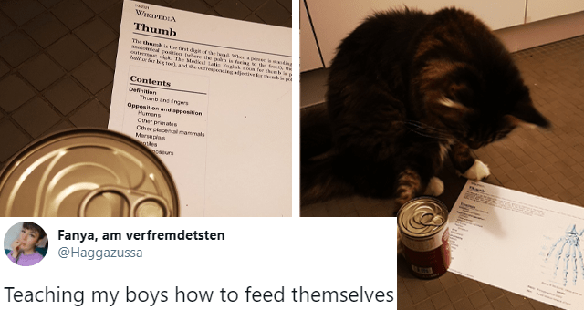 viral tweets of cats attempting to open wet food cans thumbnail includes two pictures including a wet food can with a page of instructions as well as a cat looking at the instructions 'Organism - 000 Fanya, am verfremdetsten @Haggazussa Teaching my boys how to feed themselves WiIFEA Thumb Cotents 7:43 PM - Jan 3, 2021 · Twitter for Android 18.4K Retweets 605 Quote Tweets 139.6K Likes'
