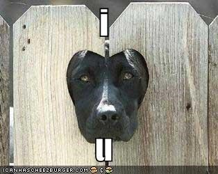 fence heart labrador love - 1333323520