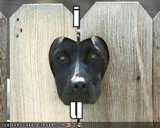 fence heart labrador love - 1333323520