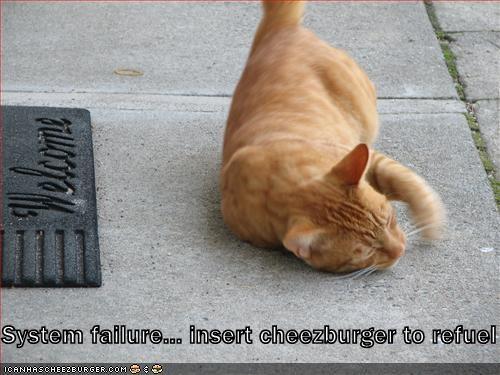 Cheezburger Image 1333444352