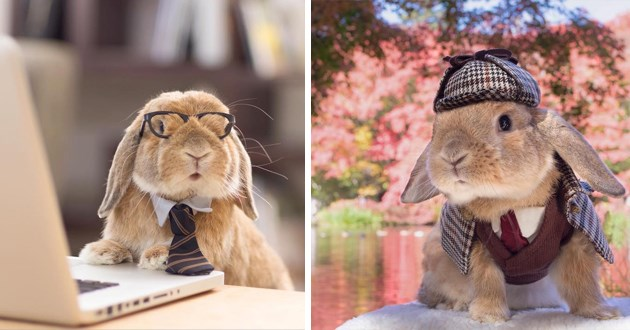 the worlds most stylish bunny - thumbnail of puipui the bunny wearing a tie and glasses and one of him wearing a detective suit