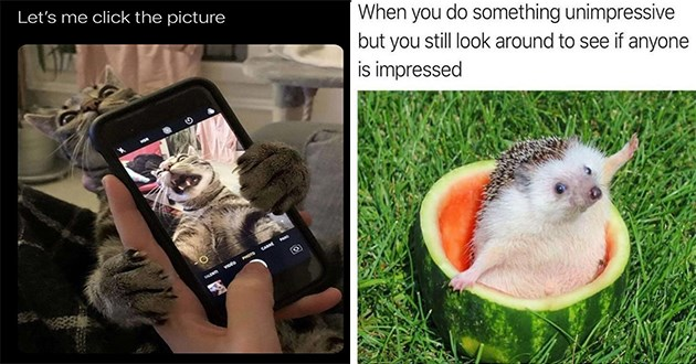 "list of funny and fresh animal memes - thumbnail includes two memes - one of a cat grabbing a cellphone ""let me click the picture"" and one of a happy hedgehog in a watermelon ""when you do something unimpressive but you still look around to see if anyone is impressed"""