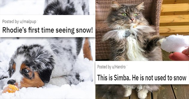 cats and dogs funny reactions to snow - thumbnail of dog loving the snow and cat looking at some snow like wtf | Rhodie's first time seeing snow | This is Simba. He is not used to snow