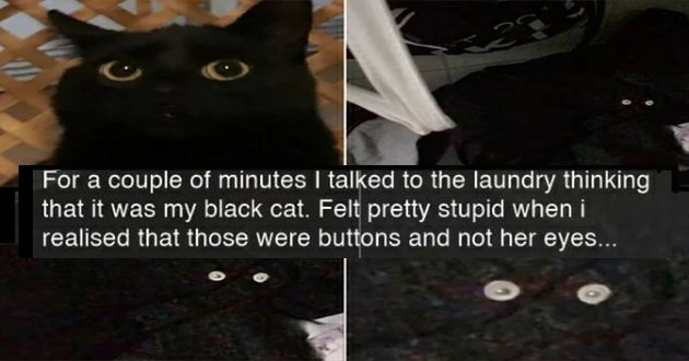 "fresh cat snaps - thumbnail of black cats and two button eyes ""For a couple of minutes I talked to the laundry thinking that it was my black cat. Felt pretty stupid when i realised that those were buttons and not her eyes..."""