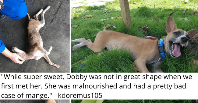 "viral imgure thread of a sick dog getting rescued and adopted by a NASA pilot thumbnail includes two pictures including a malnourished dog on the ground and another of a happy dog on grass '""While super sweet, Dobby was not in great shape when we first met her. She was malnourished and had a pretty bad case of mange."" -kdoremus105'"