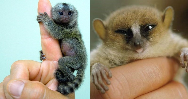 animals that are small because they are smol in size but BIG on personality