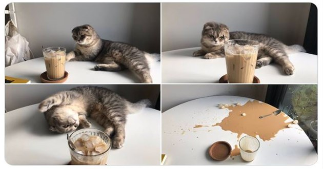 cat tweets on why you should get a cat - thumbnail of a cat and iced coffee on the table and cat playing with iced coffee and the ice coffee spilled on the table without the cat present
