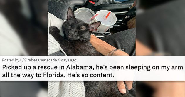 "all the newly adopted rescue animals of the week - thumbnail of happy and sleeping black cat ""Picked up a rescue in Alabama, he's been sleeping on my arm all the way to Florida. He's so content."""