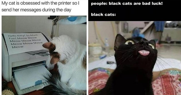 "weeks hottest and newest cat memes - thumbnail includes two memes one of a cat looking at a printer ""my cat is obsessed with the printer so i send her messages during the day"" and a black cat sticking it's tongue out ""people: black cats are bad luck! black cats:"""