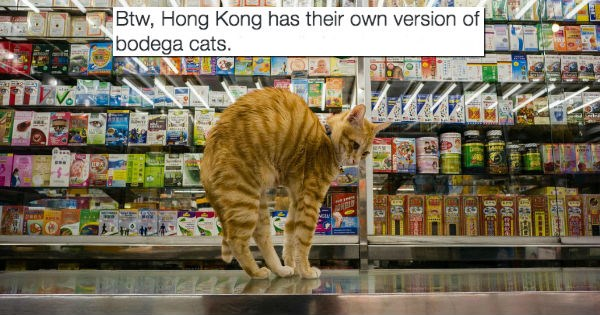 shop,hong kong,Cats,store,bodega
