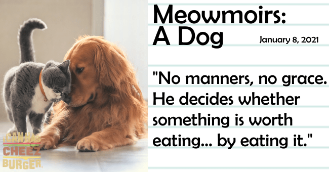 "the fifteenth entry of meowmoirs diary of a cat thumbnail includes a picture of a cat headbutting a dog the title of the entry and a quote from it 'Dog breed - Meowmoirs: A Dog January 8, 2021 ""No manners, no grace. He decides whether something is worth eating... by eating it."" CHEE BURGER'"