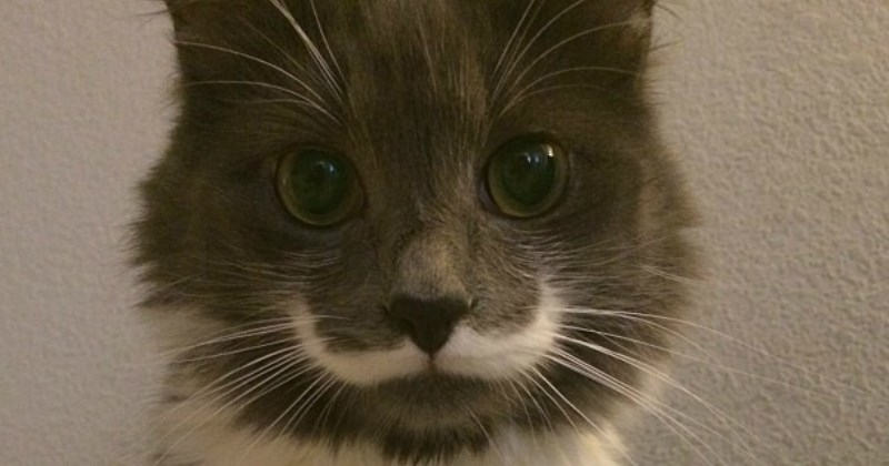 mustache list cute Cats - 1336325