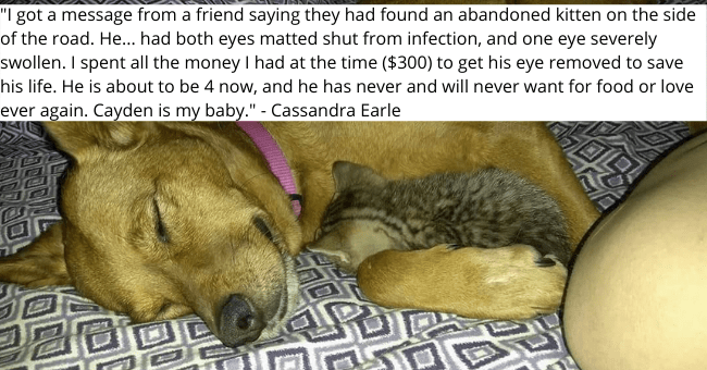 "collection of pet adoption stories from cheezburger users thumbnail includes a picture of a tiny kitten cuddling with a huge dog '""I got a message from a friend saying they had found an abandoned kitten on the side of the road. He... had both eyes matted shut from infection, and one eye severely swollen. I spent all the money I had at the time ($300) to get his eye removed to save his life. He is about to be 4 now, and he has never and will never want for food or love ever again. Cayden is my b'"