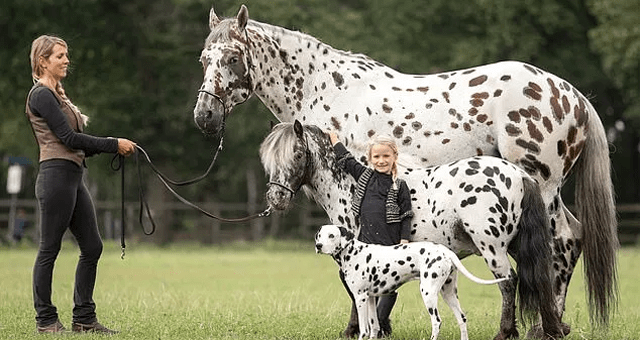 story about identical looking horse pony and dog being friends thumbnail includes a picture of a horse a pony and a dog with black spots on white fur standing in order of height with their owner and a little girl