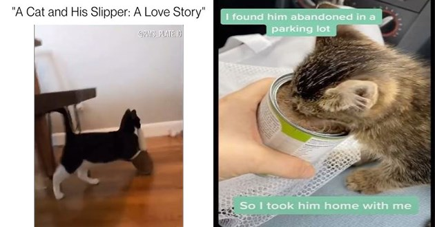 "most viral and adorable cat videos trending on instagram - thumbnail includes two images one of a cat and his slipper: a love story, and one of a kitten eating some canned wet food ""i found him abandoned in the parking lot so i took him home with me"""