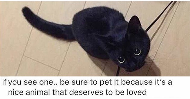 "weeks best and cutest wholesome animal memes - thumbnail includes black cat ""if you see one... be sure to pet it because it's a nice animal that deserves to be loved"""