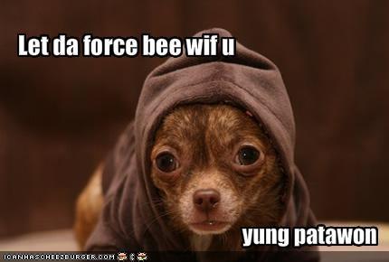 chihuahua Jedi star wars yoda - 1336910080