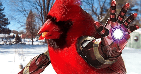 birds with arms birds - 1337093