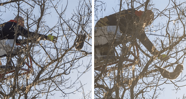 story of firefighters coming to rescue a kitten stuck in a tree but the kitten jumps off on its own and climbs up another tree thumbnail includes two pictures of a kitten in a tree and a firefighter reaching out to catch it but it jumps off on its own