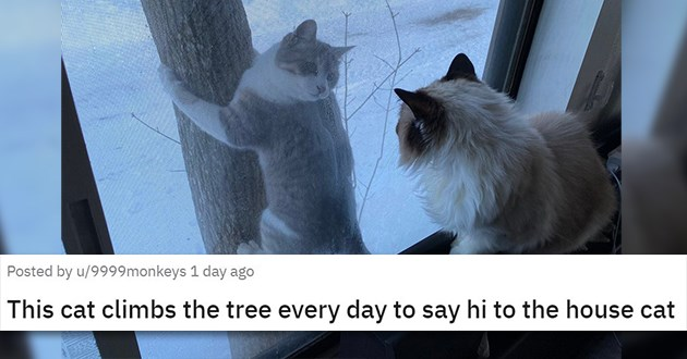 "pics and vids of the cutest animals of the week - thumbnail of cat by window and a cat outside climbing a tree ""This cat climbs the tree every day to say hi to the house cat"""