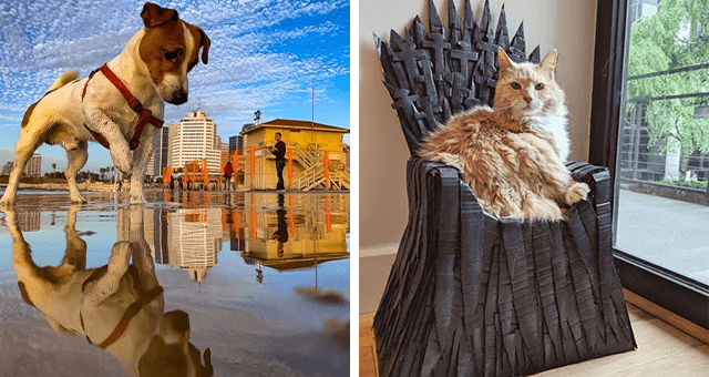 collection of pictures worth more than 1000 words thumbnail includes two pictures including a cat sitting on a homemade iron throne and another of a dog looking like its destroying a city