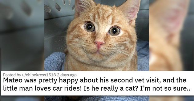 "cat medley filled with cuteness, laughs, rescues - thumbnail of smiling cat in carrier ""Mateo was pretty happy about his second vet visit, and the little man loves car rides! Is he really a cat? I'm not so sure.."""