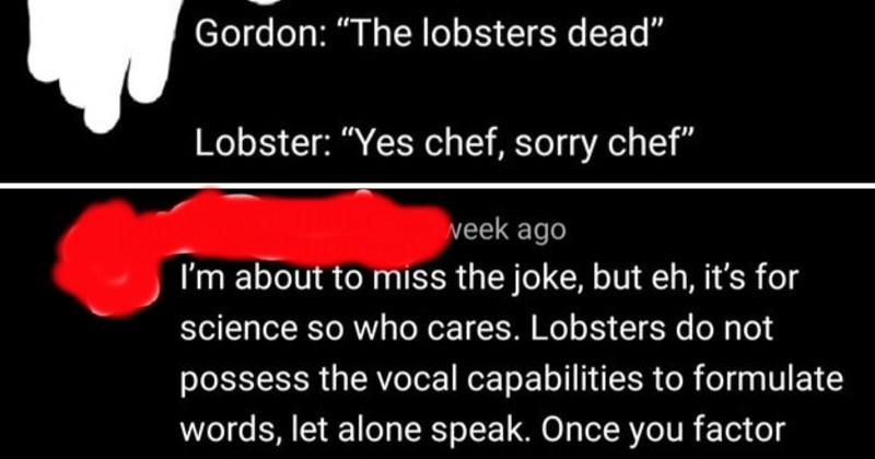 "people bragging online who think they're geniuses | Gordon lobsters dead Lobster Yes chef, sorry chef about miss joke, but eh s science so who cares. Lobsters do not possess vocal capabilities formulate words, let alone speak. Once factor fact lobster fact, deceased idea aforementioned lobster formulating sentence ""Yes chef, sorry chef"" is completely, and utterly preposterous."
