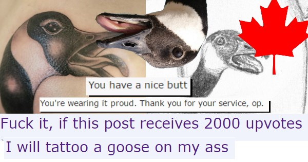op delivers Canada butt memewar tattoo