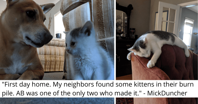 "imgur thread about a kitten who was found in a garbage pile thumbnail includes two pictures including a kitten with a dog and a kitten sleeping on the headrest of a sofa '""First day home. My neighbors found some kittens in their burn pile. AB was one of the only two who made it."" - MickDuncher'"