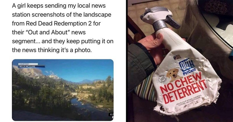 "funny, memes, rebels, first world anarchists, anarchy, anarchists, badass, reddit | girl keeps sending my local news station screenshots landscape Red Dead Redemption 2 their ""Out and About"" news segment and they keep putting on news thinking 's photo. Bella salute COURTEST BELLA MCGUIRE 