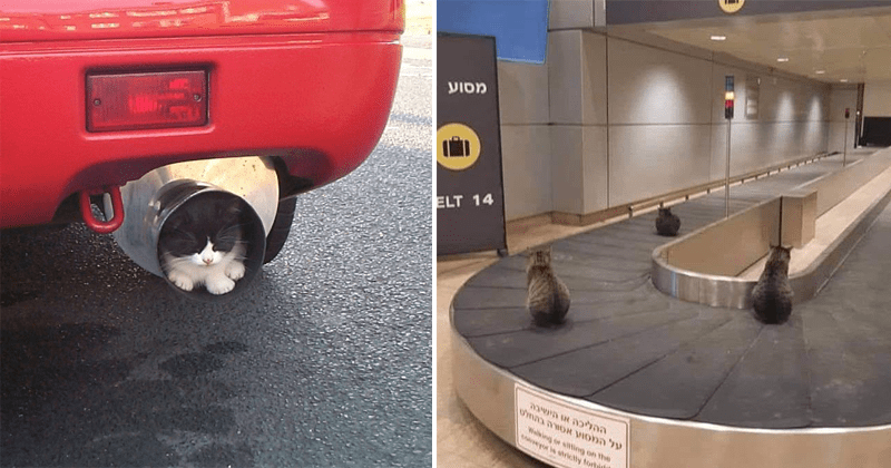 Funny pictures of cats in weird places | small kitten sleeping inside a car's exhaust pipe | three cats riding a baggage carousel at an airport