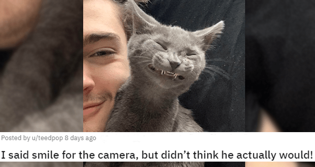 pictures of cats with their teeth peeking out thumbnail includes one picture of a grey cat smiling really wide 'I said smile for the camera, but didn't think he actually would! u/teedpop'