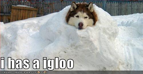 husky snow - 1338804992
