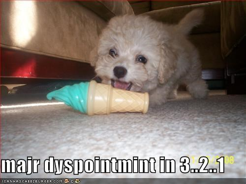 floor,havanese,ice cream,major,puppy,tiny,toy,white