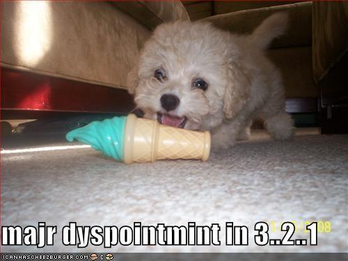 floor havanese ice cream major puppy tiny toy white - 1338945280