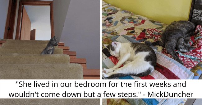 "imgur thread about a kitten getting used to its new home thumbnail includes two pictures including a tiny kitten sitting on the stairs and another of two cats on a bed together '""She lived in our bedroom for the first weeks and wouldn't come down but a few steps."" - MickDuncher'"