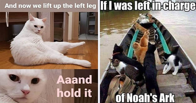 "weeks hottest and newest cat memes - thumbnail includes two memes - one of a cat ""and now we lift up the left leg aaand hold it"" and one of cats on a rowboat ""if i was left in charge of noah's ark"